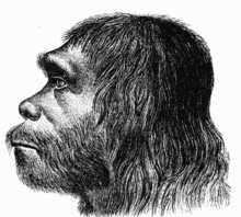 Sketch of a Neanderthal Man